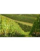 Notre sélection de vins du Sud Ouest